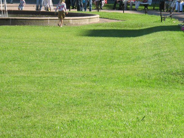 Городской газон