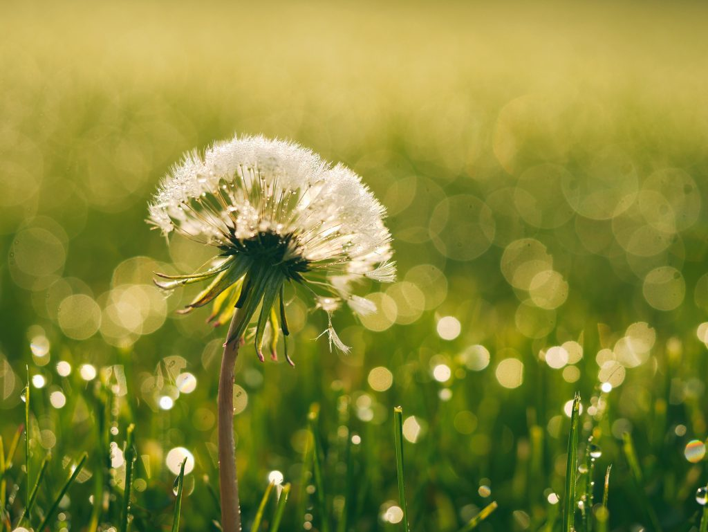 посевной или рулонный газон: что лучше