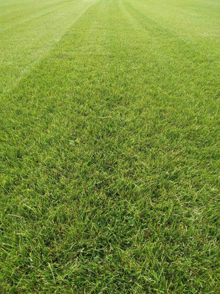 Сравнение составов рулонных газонов
