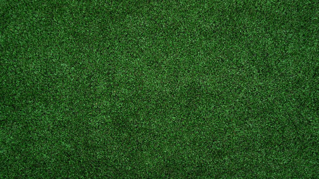 состав трав в рулонном газоне